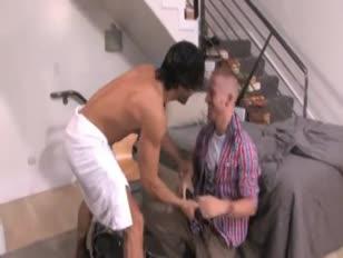Hombre metiendo el pene a yegua en celo